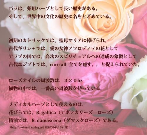 aboutrose